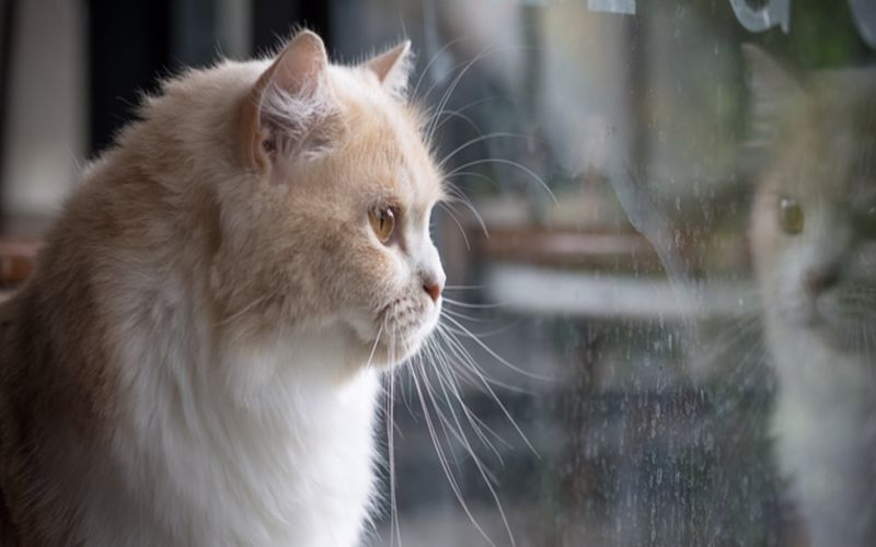 دلایل افسردگی گربه