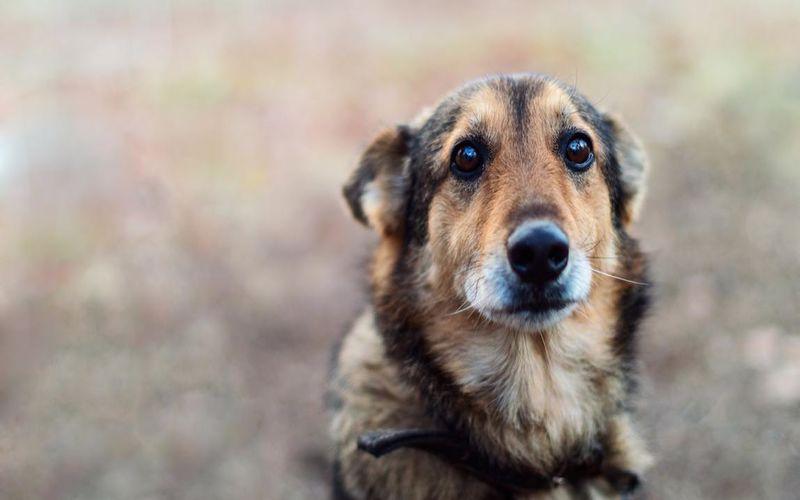 افسردگی بعد از زایمان سگ