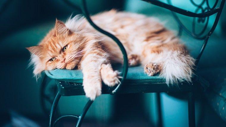 نشانه های افسردگی در گربه