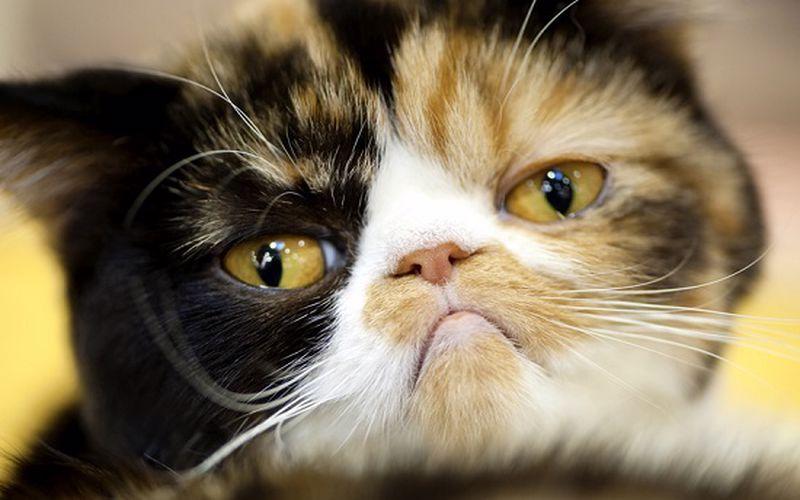 عکس گربه افسرده