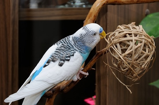 عکس وسایل بازی چوبی مرغ عشق