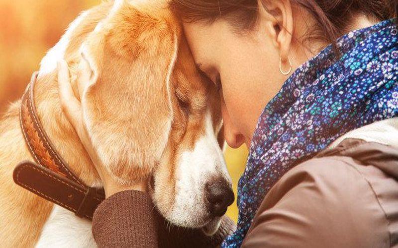 محبت به سگ افسرده