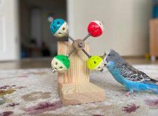 وسایل بازی مرغ عشق؛ مرغ عشقها چه اسباببازیهایی دوست دارن؟