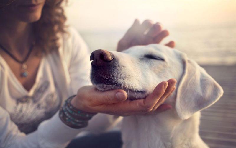 درمان سگ افسرده