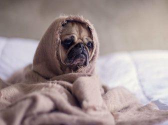 علائم و درمان افسردگی در سگها؛ سگها هم افسرده میشن؟