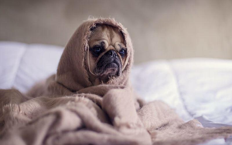 افسردگی سگ: درمان و دلایل