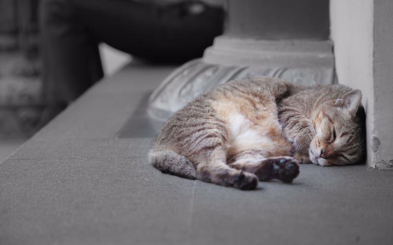 دلیل کم خونی نوزادان گربه