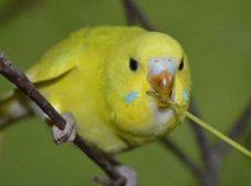 آموزش حرف زدن به مرغ عشق؛ چطور پرندهمون رو با خودمون همزبون کنیم؟