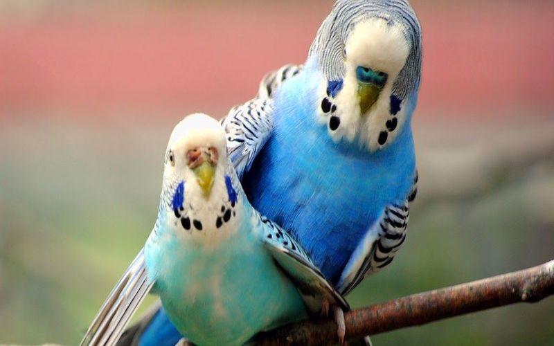 سخنگو کردن مرغ عشق