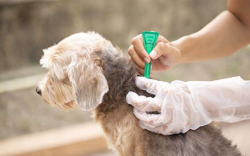پیشگیری و درمان کک و کنه سگ