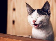 دلایل و درمان سرفه گربه، کی لازمه بریم پیش دامپزشک؟