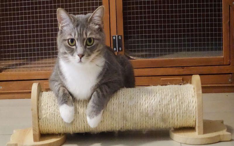 درمان سرفه گربه