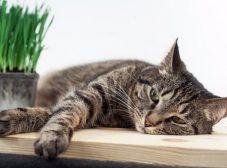 دلایل، راههای پیشگیری و درمان کم خونی گربه رو بهتر بشناسیم