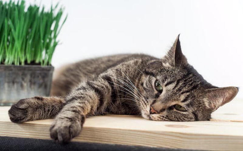 دلایل بروز کم خونی گربه و راههای درمان و پیشگیریش رو بهتر بشناسیم