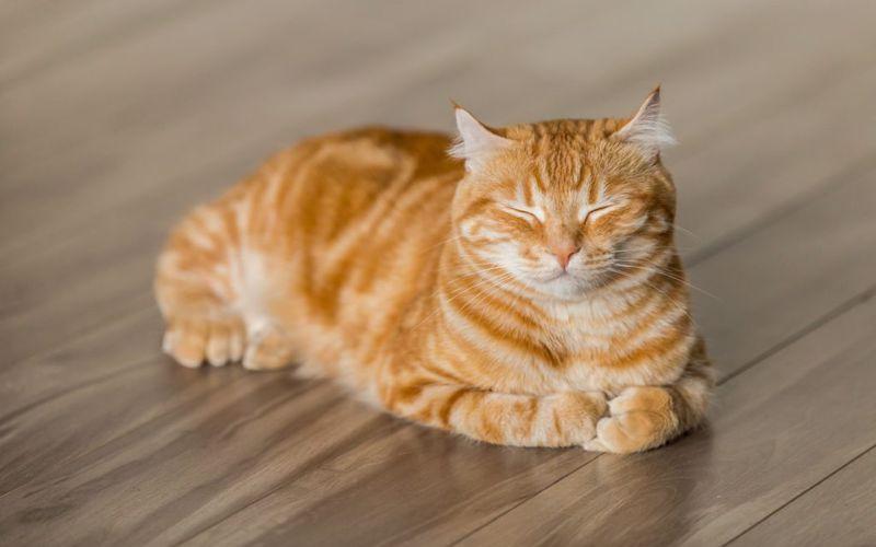 علت غذا نخوردن گربه