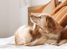 آشنایی با علائم و روشهای پیشگیری و درمان کک و کنه سگ