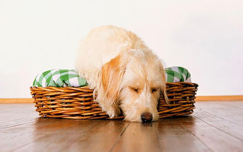تشخیص بیحالی سگ