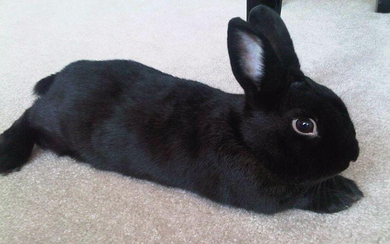 اسم خرگوش معروف