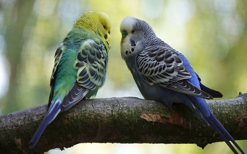 با سرماخوردگی مرغ عشق چیکار کنیم