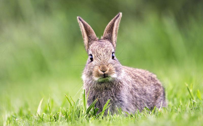 انتخاب اسم خرگوش از روی ظاهر