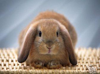 اسم خرگوشمون رو چی بذاریم؟ + انواع اسم ایرانی و خارجی