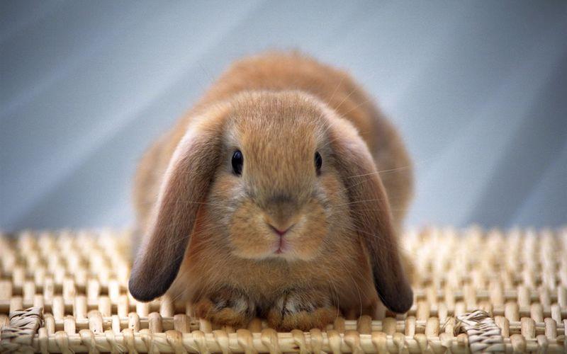 اسم خرگوشمون رو چی بذاریم؟