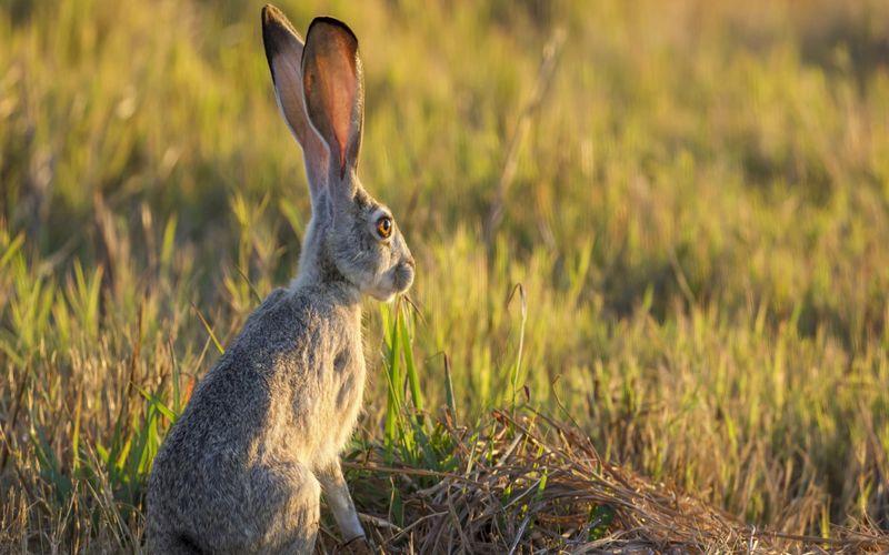نام زیبا برای خرگوش صحرایی