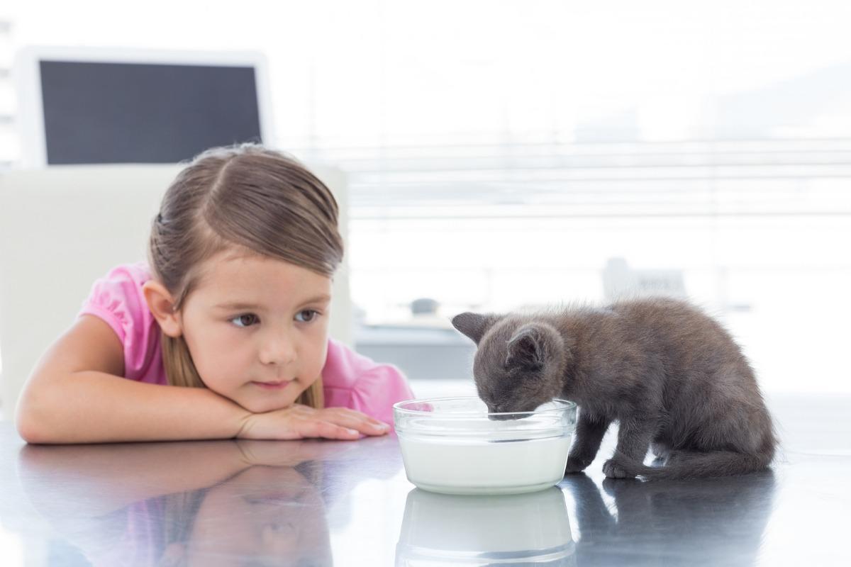 بچه گربه در حال شیر خوردن