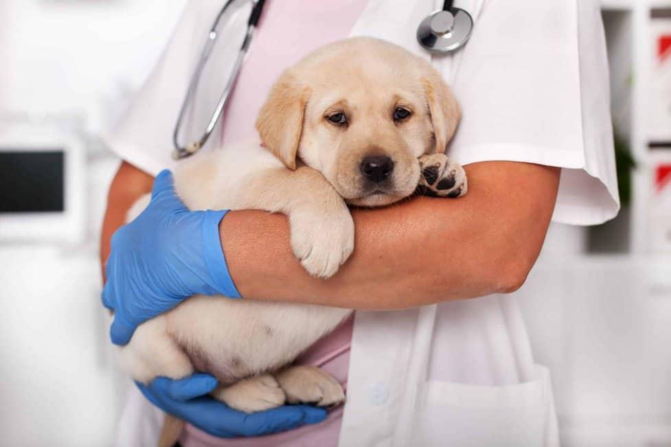 روش درمان سرفه کردن سگ