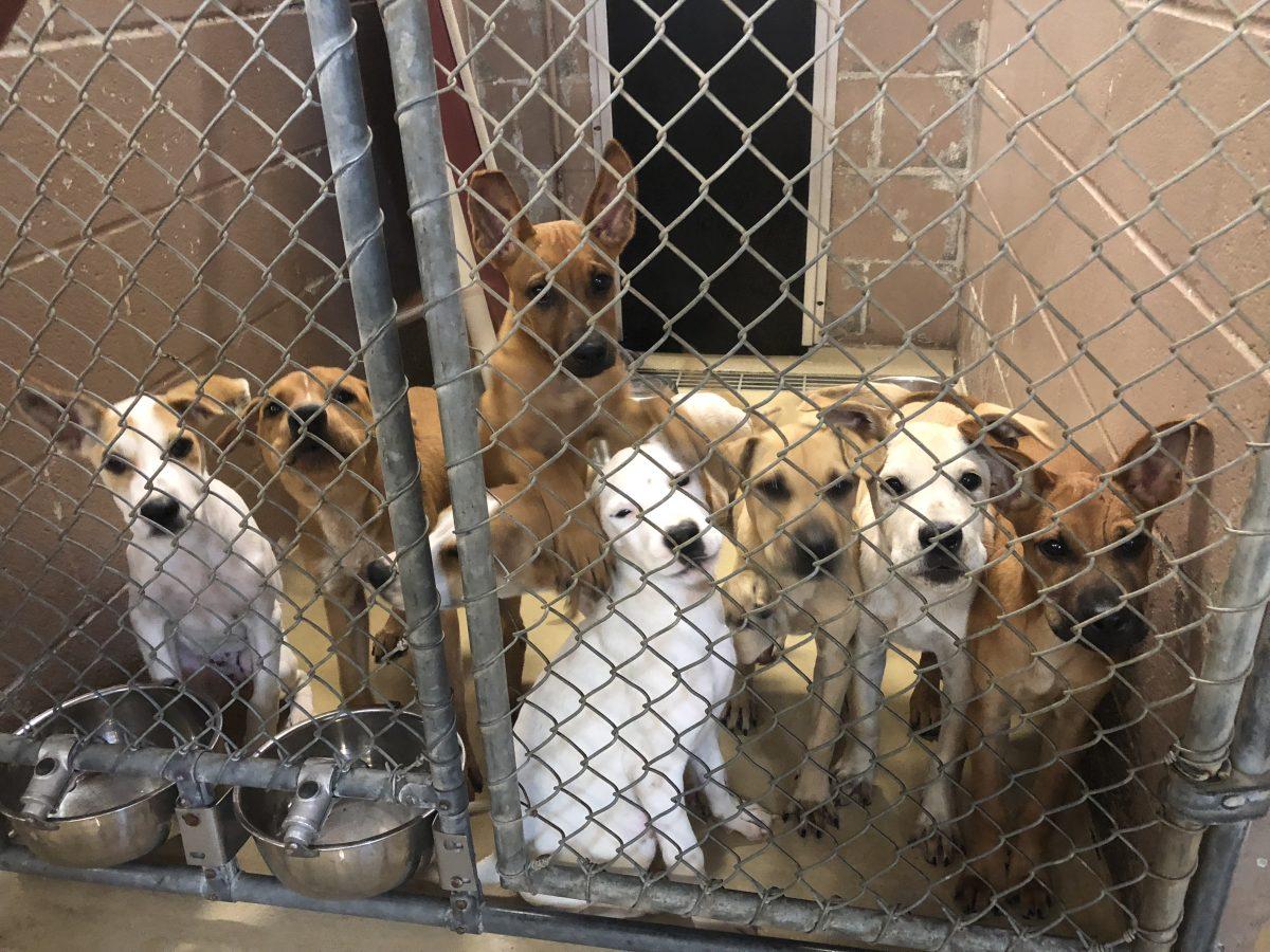 سگ ها در پناهگاه