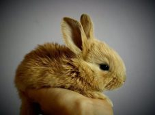 تعیین جنسیت خرگوش؛ چجوری جنسیت خرگوش رو تشخیص بدیم؟
