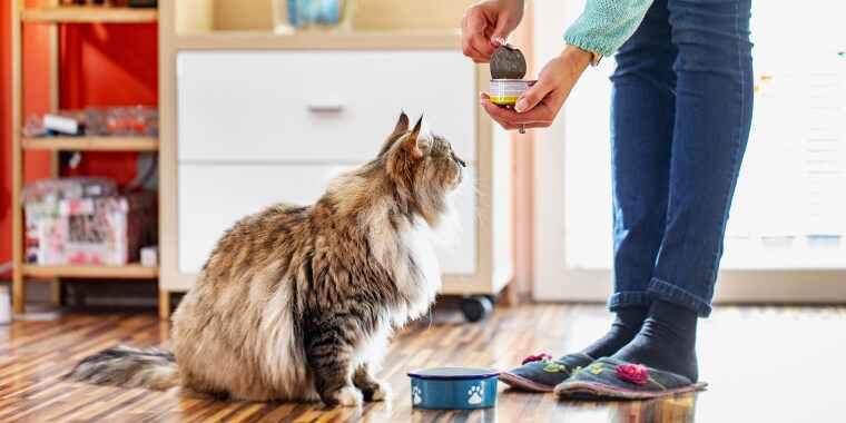 نحوه غذا دادن به گربه