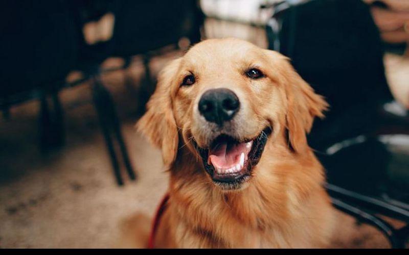 فواید خوردن کشک برای سگ